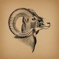 Vintage Art Ram Horns Animal Artwork Goat by SparrowHousePrints