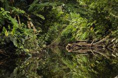 Der Yasuní-Nationalpark in Ecuador ist eine der artenreichsten Regionen des Planeten. Auf manchem Baum leben hier mehr Insektenarten als in ganz Europa. Doch unter der Erde liegt Öl, das jetzt gefördert wird. Eine Geschichte über Wunsch und Wirklichkeit aus dem Urwald Amazoniens.