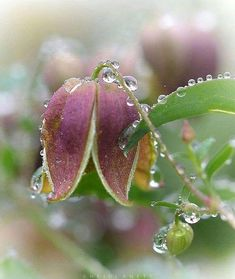 >Feature Chosen by Adm . Nature Photography, Travel Photography, Still Life Flowers, Dew Drops, Flora And Fauna, Something Beautiful, Congratulations, Bloom, Landscape
