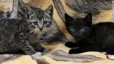 Subway-stopping kittens now have names, caretakers as they await adoption