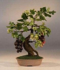 bonsai tree - Pesquisa Google