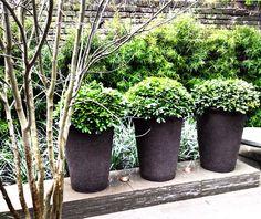 Atelier Vierkant and pitosporum Love Garden, Home And Garden, Outdoor Spaces, Outdoor Living, Formal Garden Design, Pot Plants, Formal Gardens, Courtyards, Container Plants