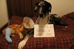 An epic gallery of funny dog shaming photos that prove these dogs are the naughtiest in the world. The best dog shaming picture gallery ever. Funny Animal Pictures, Cute Funny Animals, Funny Cute, Funny Dogs, Cute Dogs, Hilarious, Funny Memes, Funny Captions, Great Dane Funny