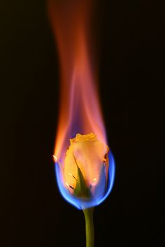 yellow rose on fire & flame art Gif Kunst, Rose On Fire, Burning Rose, Cool Pictures, Cool Photos, Fire Flower, Fire Art, Photoshop, France Photos