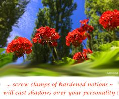 ... screw clamps of hardened notions will cast shadows over your #personality !