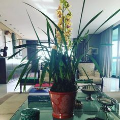 Cheguei em casa hoje depois de uma semana fora encontrei esse carinho na minha mesa flores frescas. Existe melhor maneira de ser recebida? Para mim não. Amei Brigadu !!!