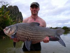 Gavin with a nice 85-90lb Carp - Caught at http://jurassicfishingthailand.com #Fishing #Carp #CarpFishing