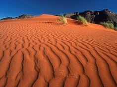 Crawling on the Dune Namib Rand Nature Reserve Namibia