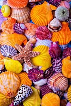 Starfish with Pretty Colorful Seashells