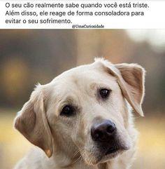 VERDADE!!!❤️❤️❤️ #amocachorro  #cachorro  #cachorroétudodebom  #amoanimais  #petmeupet  #cachorros