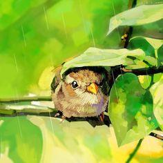 小鸟在躲雨。一片叶子就是它的小伞。