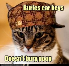 Scumbag Cat - Sift Through It!