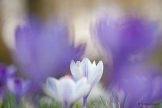 Incanto Images Fotografie: Lentesfeer