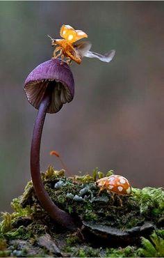Yellow Tse Buggy on a Fairy Garden Fantasy Magic Mushroom, Toadstool. Wild Mushrooms, Stuffed Mushrooms, Slime Mould, Mushroom Fungi, Macro Photography, Levitation Photography, Winter Photography, Abstract Photography, Beach Photography