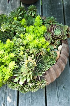 Succulents on a picnic table.