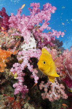 15 Life-Changing Adventures You Can Embark On In Fiji Underwater Creatures, Underwater Life, Ocean Creatures, Marine Aquarium, Marine Fish, Saltwater Aquarium, Fauna Marina, Beautiful Sea Creatures, Ocean Life