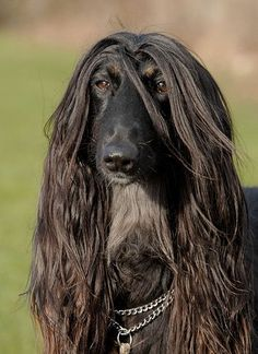 Hotest long haired dude ! THAT look...