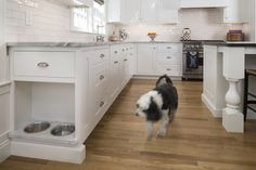 Check out this kitchen built-in -- a little doggie lunch counter!