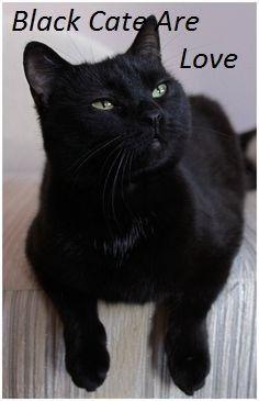 Black cats are love
