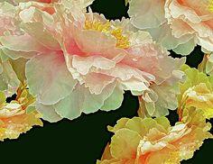 Floating #Peonies Bouquet 31 -  #Art by Lynda Lehmann - https://fineartamerica.com! https://fineartamerica.com/featured/floating-bouquet-31-lynda-lehmann.html