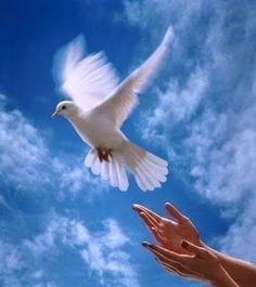 Elucubrações: Paz interior - Por Dalai Lama