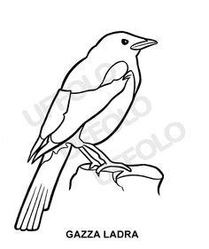 disegni immagini da stampare e colorare - Uccelli e volatili di ogni specie | Uffolo