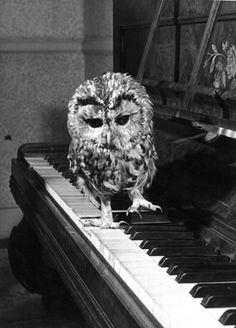 A really sweet vintage photo of an adorable owl walking across piano keys~