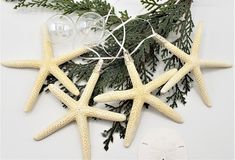 """Starfish Christmas ornaments. Nautical decor beach star fish Christmas holiday ornaments in a set of 4. Natural white 3-4"""" starfish. Simple, beachy, and elegant, you can't go wrong with these pretty ornaments.  They hang from tiny white satin ribbon secured by a silver toned topper.  They're perfect for holiday giving, decorating the tree, tying on packages, secret Santa gifts, or hanging in windows for the holiday season.   SET OF 4."""