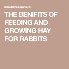 THE BENIFITS OF FEEDING AND GROWING HAY FOR RABBITS