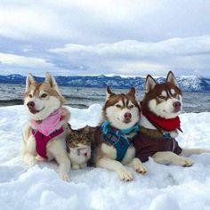 awwww! Cute! : Photo