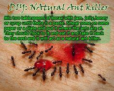 DIY Natural Ant Killer