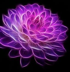 Fractal Fractal Art Flower Photography by PhotoCatcher on Etsy