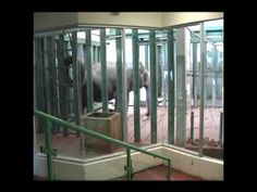 Lucy's Story - SaveLucy.ca This cold cage is where she spends by far the most time in this cage. Elephants need companionship. The zoo claims she has bonded with her keepers. If true, it is not her family.