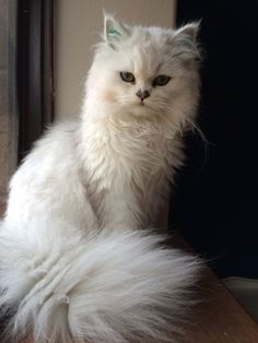 Jan's Page of Awesomeness! >. (just a beautiful cat)