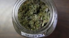 9th U.S. Circuit Court of Appeals rules constitution does not apply to medical marijuana card holders