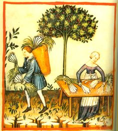 Tacuinum sanitatis in medicina, Codex Vindobonensis, ca. 1390
