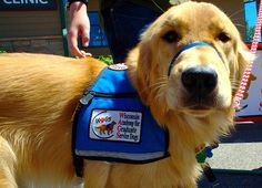 """Emotional Support Animals (like service dogs but don't need to be trained) allowed in """"no-pet"""" apartments. And service dogs for anxiety and PTSD that you can bring to work/school/on the bus/etc."""