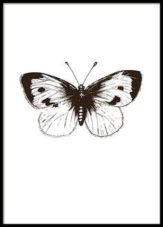 Poster mit Schwarz-Weiß-Illustration eines Schmetterlings