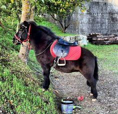 Trilli Pony