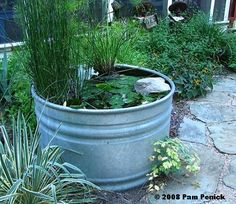 container water garden in a stock tank