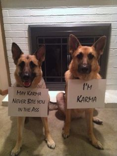 And Karma is a B*tch! #dogs #humor #karma
