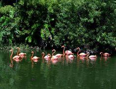 Jacksonville Zoo and Gardens- Jacksonville, FL