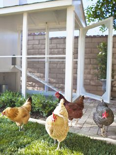 How To Build a Chicken Coop - Plans to Build a Chicken Coop - Country Living