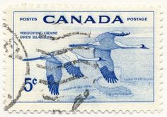 Wildlife Series, Whooping Cranes (issued 1955)
