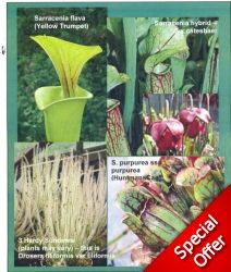 Hardy Collection large - South West Carnivorous Plants