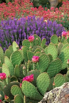 Cactus are great in well drained, sunny positions.  Love their bright flowers.