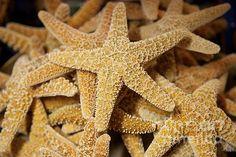"""""""Pretty Starfish"""" by Carol Groenen  #starfishart #starfishphoto #beachdecor #nature     carol-groenen.artistwebsites.com"""