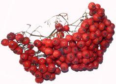 Vogelbeeren Küchentipps September, Tricks, Desserts, Recipes, Food, Rowan, Medicinal Plants, October, Berries