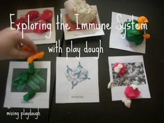 Exploring the Immune System {Playdough} from Mixing Playdough (includes Free Printable)
