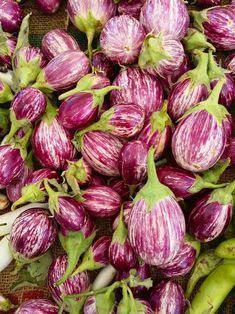 New Leaf Nurseries - Aubergine 'Pinstripe' Plant Eggplant Varieties, Eggplant Seeds, Preserving Eggplant, Growing Eggplant, Conservation, Purple Fruit, Crop Rotation, Eggplant Parmesan, Plant Information